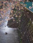 麻生川橋下流右岸4月15日