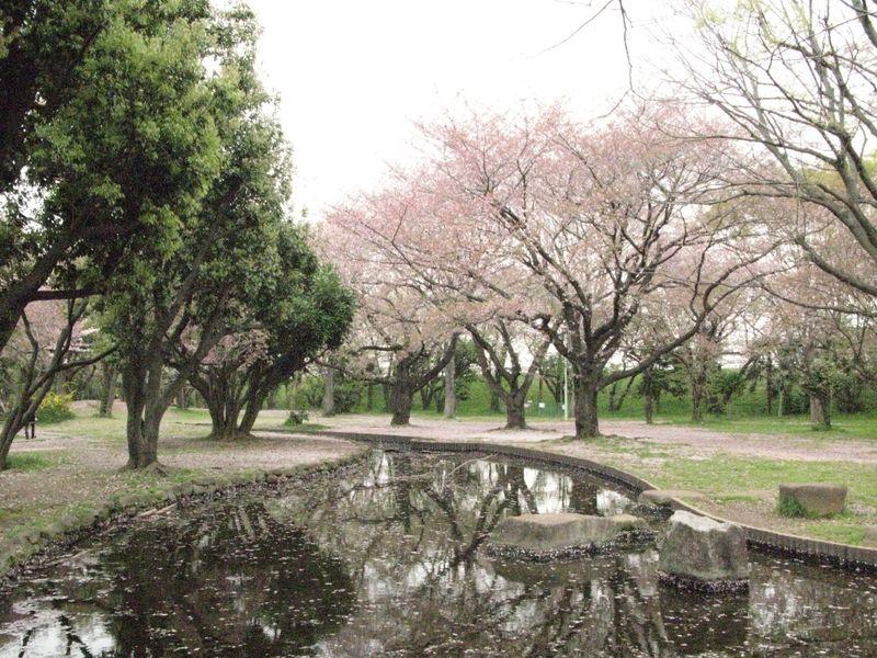 IMG_0065稲田公園_1