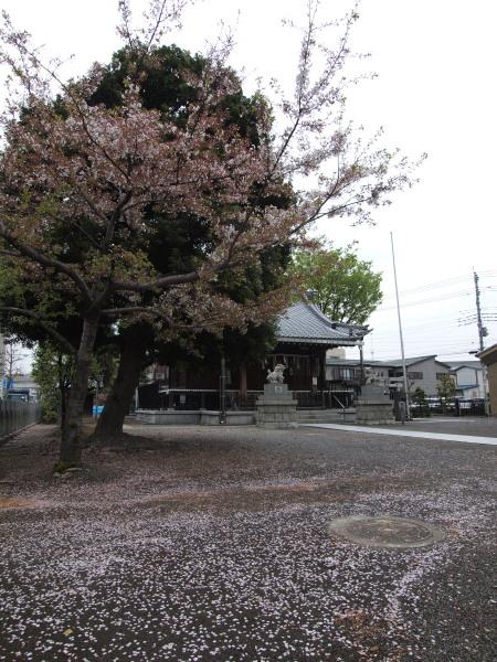 桜20120417_02r
