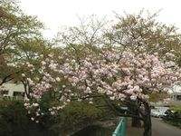 IMG_0022麻生川_1