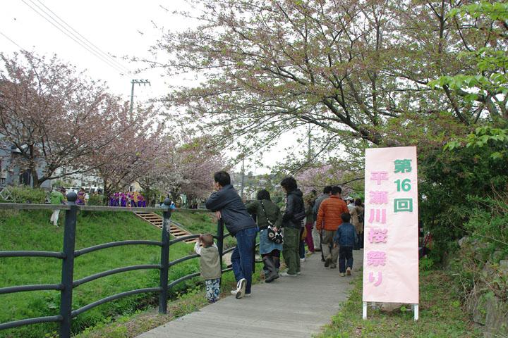 桜祭り01