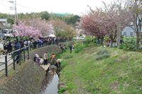 桜祭り05