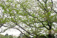 0425F003白山神社定点枝