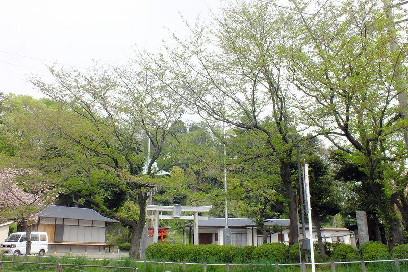 0425F004白山神社定点枝
