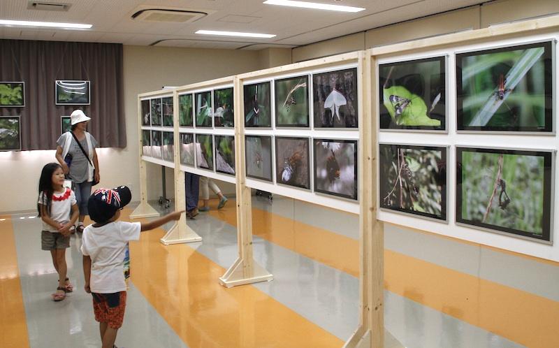 昆虫写真展