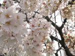 20130326多摩川緑地03