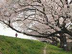 20130326多摩川緑地04