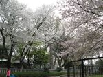 20130330夢見ケ崎動物公園02