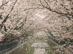 20130331山口橋付近02