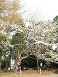 20130401黒川汁守神社03