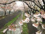 20130402山口橋付近03