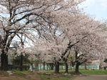 20130326大師公園03