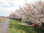 20130326多摩川緑地01