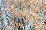20130328白山むじなが池山桜04