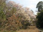 20130328生田緑地ほたるの里01