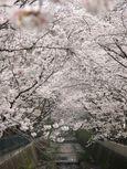 20130329山口橋付近03