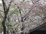 20130330夢見ケ崎動物公園01