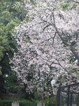 20130330夢見ケ崎動物公園03