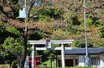 20130407白山神社定点観測枝03