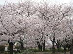 20130326大師公園01
