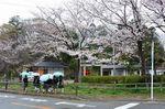 20130325白山神社定点観測枝03