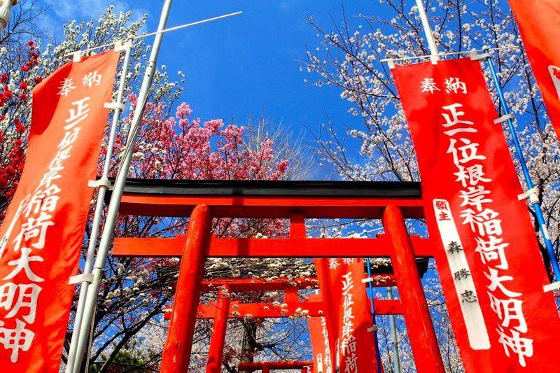 20130326negishiinari01