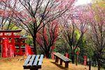 20130326negishiinari05