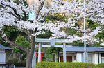 20130328白山神社観察枝03