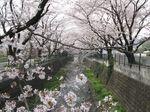 20130329山口橋付近02