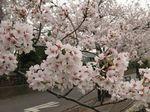20130330江川せせらぎ遊歩道04