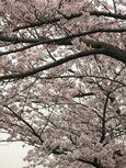 20130330江川せせらぎ遊歩道02