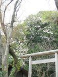 20130401黒川毘沙門天堂03