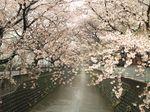 20130402麻生川橋付近01