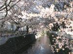 20130404麻生川橋付近01