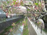 20130407山口橋付近02