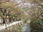 20130407麻生川橋付近01
