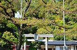 20130411白山神社定点観測枝03