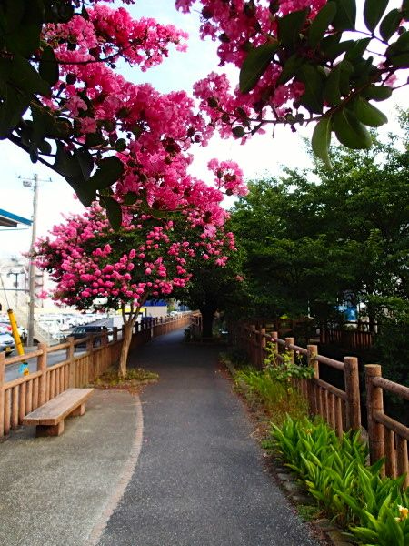 20130721nikaryou_nakahara_sarusuberi03