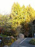 20131122ikutaryokuchi04_metasekoia