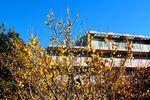 20140116nakanoshima_robai03