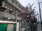 20140208nakaharadensyaku_sakura03