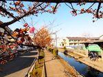 20140223egawaseseragi_kawazu01