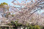 20140331sugaoryokuchi02