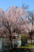 20140328nikaryo_hashimotobashi01