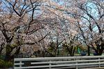 20140407asaogawa_yamaguchibashi05