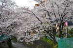 20140406asao_asaonigoubashi01