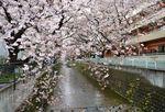 20140406asao_asaonigoubashi05