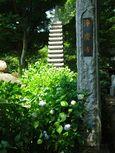 20140601jyokeiji_ajisai01