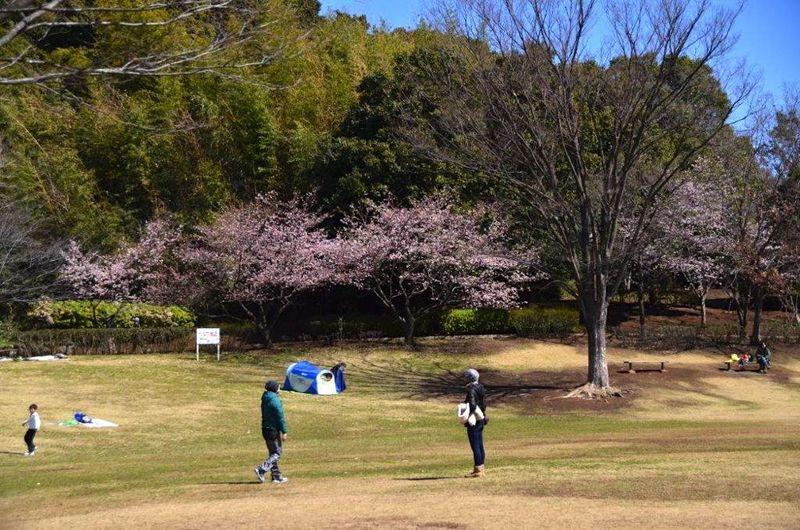 20140314furusatokoen_tamanawa02