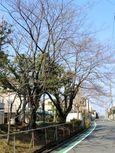 20140328sugaodaiyonkouen04